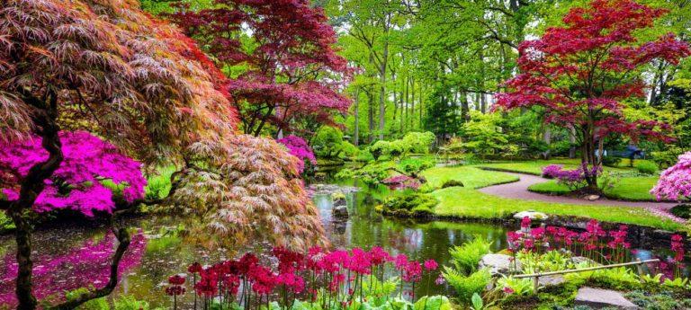 Quelques idées d'association de couleur pour le jardin